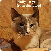 Adopt A Pet :: Molly - Bentonville, AR