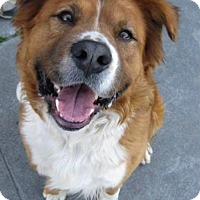 Adopt A Pet :: McCoy - Encino, CA