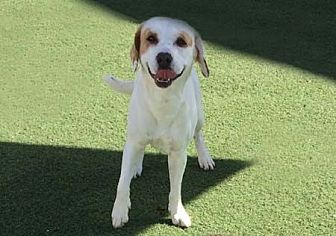 Beagle/Hound (Unknown Type) Mix Dog for adoption in Mira Loma, California - Jake