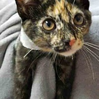 Adopt A Pet :: Eclipse - Gahanna, OH