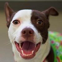 Adopt A Pet :: Gizmo - Philadelphia, PA