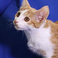 Adopt A Pet :: Smudgey - Winston-Salem, NC