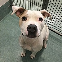 Adopt A Pet :: September/cali - Raleigh, NC