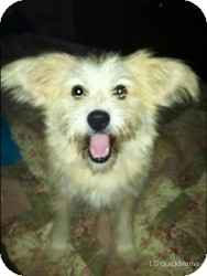 Terrier (Unknown Type, Medium) Mix Dog for adoption in Mary Esther, Florida - Odie
