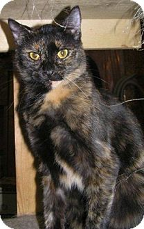 Domestic Shorthair Cat for adoption in Portage la Prairie, Manitoba - Zoe