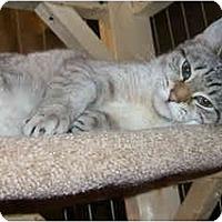 Adopt A Pet :: Liz - Catasauqua, PA