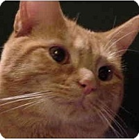 Adopt A Pet :: Bailey - Chesapeake, VA