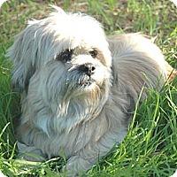 Adopt A Pet :: SAMMI - Salt Lake City, UT