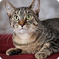 Adopt A Pet :: Sunny - Eagan, MN