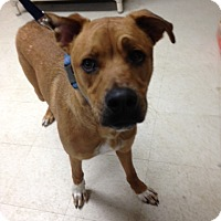 Adopt A Pet :: Luke - Willington, CT