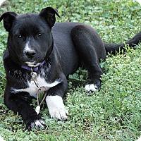 Adopt A Pet :: Ellie Mae - Brattleboro, VT