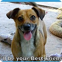 Adopt A Pet :: George Clooney***Video* - Pasadena, CA