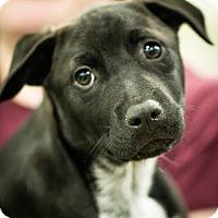 Adopt A Pet :: Brook - Gainesville, FL