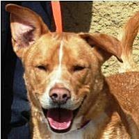 Adopt A Pet :: DEXTER & THUMPER - Chandler, AZ