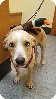 Whippet Mix Dog for adoption in Darlington, South Carolina - Sir Elton