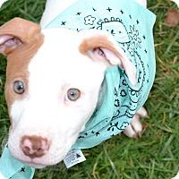 Adopt A Pet :: Dozer - Albemarle, NC