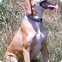 Adopt A Pet :: Jessie - East Hartford, CT