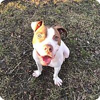 Adopt A Pet :: Phoenix - Emmett, MI