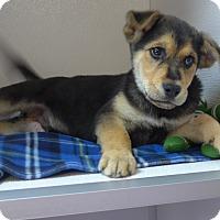 Adopt A Pet :: Tesla - Manning, SC