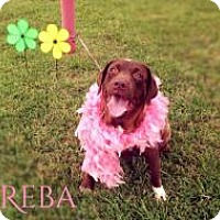 Adopt A Pet :: Reba - West Palm Beach, FL