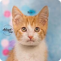 Adopt A Pet :: Rob - Cincinnati, OH