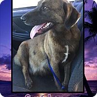 Adopt A Pet :: Gretchen - Ringwood, NJ