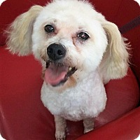 Adopt A Pet :: Mikey - Vernon, CT