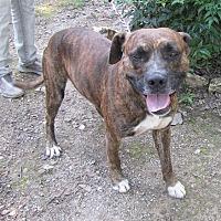 Adopt A Pet :: Mitch - Mountain Home, AR