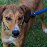 Adopt A Pet :: Tilly - Sparta, NJ