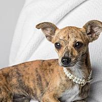 Adopt A Pet :: Tiger Lily - Bastrop, TX