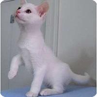 Adopt A Pet :: Sawyer - Richmond, VA
