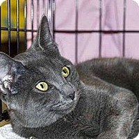 Adopt A Pet :: Stoli - New Port Richey, FL
