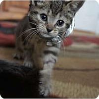 Adopt A Pet :: Molly - Xenia, OH