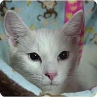 Adopt A Pet :: Peter&Paul - Chesapeake, VA
