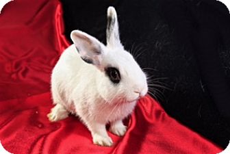 Other/Unknown Mix for adoption in Montclair, California - Divina