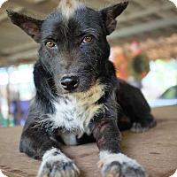 Adopt A Pet :: Moon - Boulder, CO