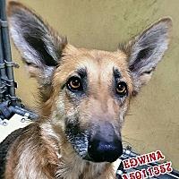 Adopt A Pet :: Edwina - Mocksville, NC