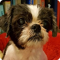 Adopt A Pet :: Kori Montgomery - Urbana, OH