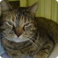 Adopt A Pet :: Claudia - Hamburg, NY