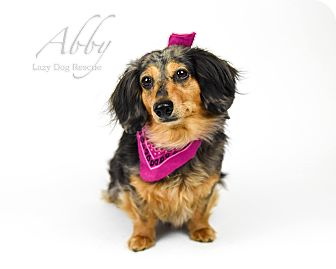 Dachshund Dog for adoption in Valley Center, California - Abby