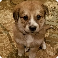 Adopt A Pet :: Beth - Fredericksburg, VA