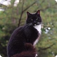 Adopt A Pet :: Lyla - Harrisonburg, VA