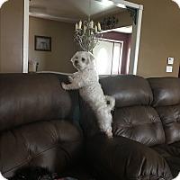 Adopt A Pet :: Josie - Prole, IA