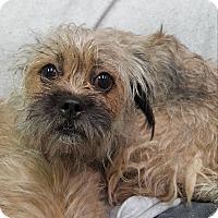 Adopt A Pet :: Rosie - Pottsville, PA