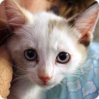 Adopt A Pet :: Darling - Temecula, CA