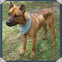 Adopt A Pet :: Buddy Buzz - Ocala, FL