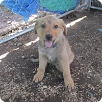 Adopt A Pet :: Tryan - Rocky Mount, NC