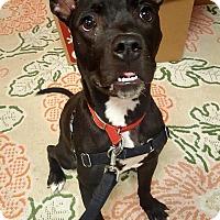 Adopt A Pet :: Loca - Walden, NY