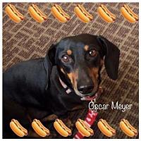 Adopt A Pet :: Oscar - Los Angeles, CA