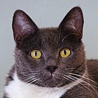Adopt A Pet :: Naomi - Norwalk, CT